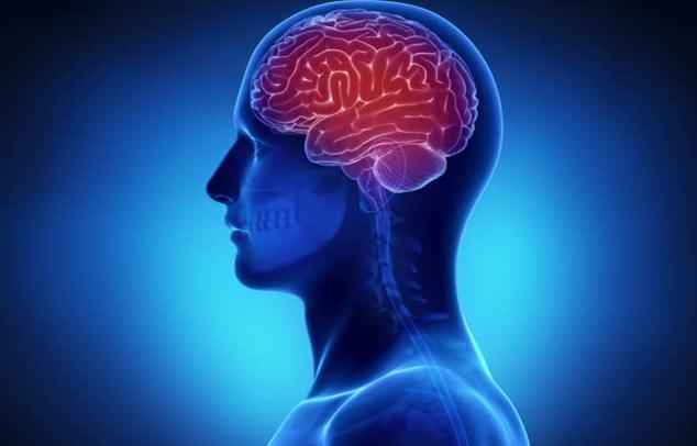 Die saisonale Allergien beschleunigen den Alterungsprozess des Gehirns